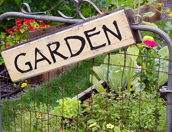 Guest Blog, Steve Ott Editor of Kitchen Garden Magazine